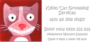 Kylies Cat Grooming Services and also all dogs too!
