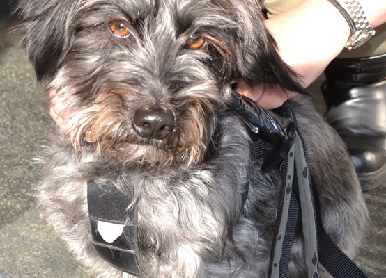 Bucks is a Scottish Terrier Cross pampered by Kylies Cat Grooming Services also all size dogs!