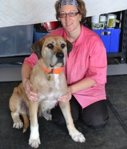 Dakota is a Foxhound Bull arab x Mastiff pampered by Kylies Cat Grooming Services also all size dogs!