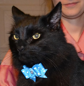 After shot - Merzbow is a Mainecoon X Domestic breed pampered by Kylies Cat Grooming Services Also All Size Dogs
