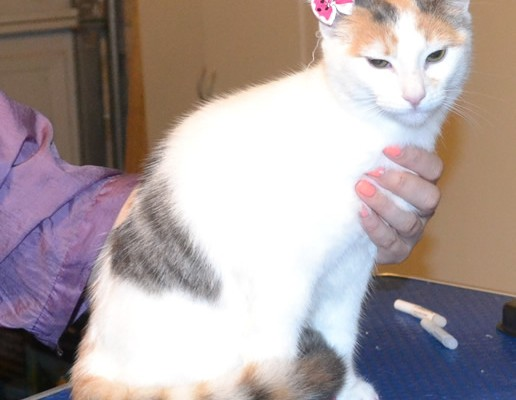 Nala is a 6 month old Short Hair Domestic. She had her nails clipped, ears cleaned a wash n blow dry and Baby Pink Softpaw nail Caps .  Pampered by  Kylies Cat Grooming Services also all size dogs.