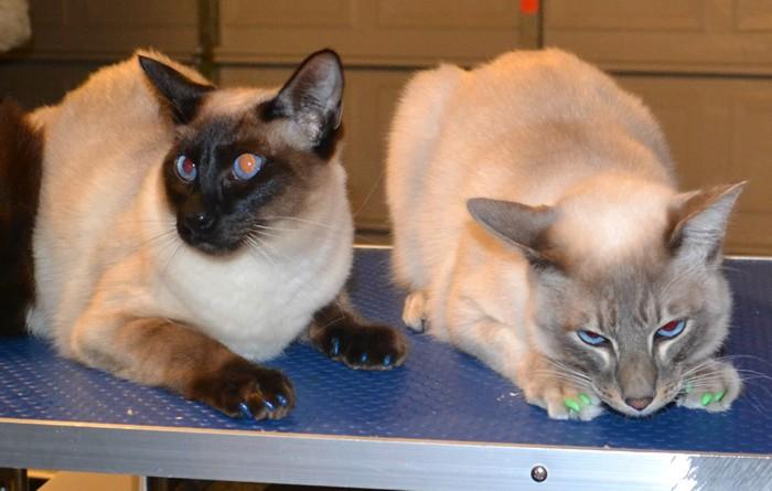 Keiko and Monty