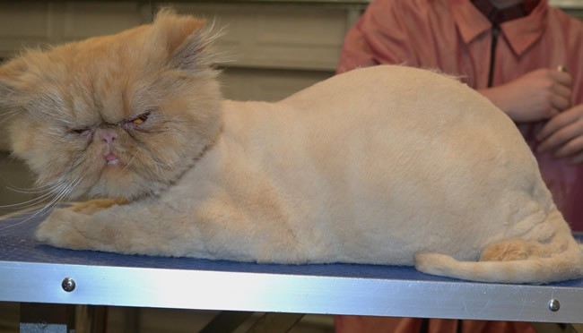 Horatio is a Persian.