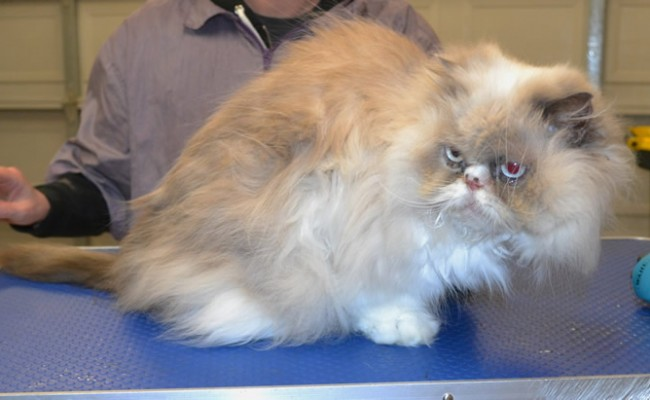 Millie's a Persian.