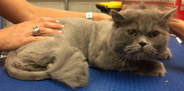 Cheeko is a 10 mth old Persian.