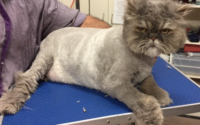 Horace John is a 8kg Persian who has bad arthritis in his bad legs. He did very well though.