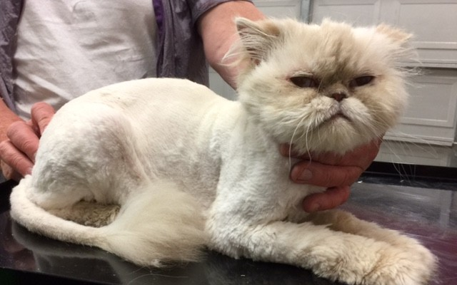Max is a Persian.