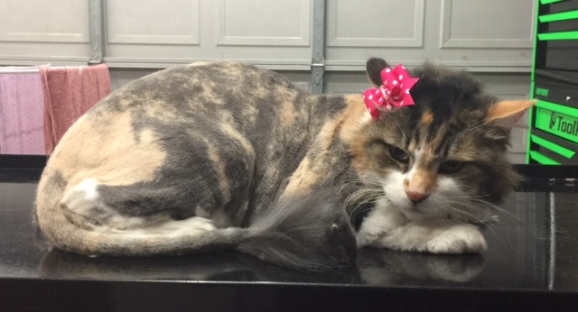 Trixie is an 18 yr old long hair domestic.